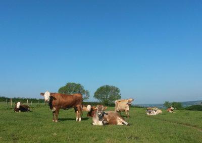 Cowpots Camping 62